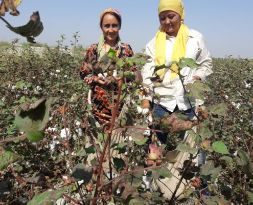 Cotton Harvest in Namangan © UGF 2016