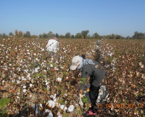 Medical Staff on the cotton fields in Dustabad © UGF 2016