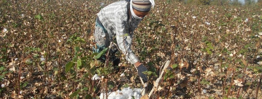 Doctor from the Central Hospital in Dustabad on the cotton field © UGF 2016