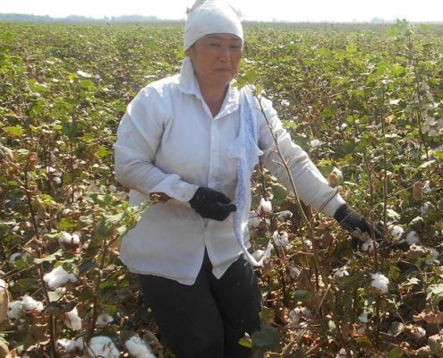 Doctors of clinic no2 of Angren Medical Association are picking cotton in Buka district