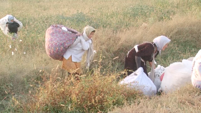 Cotton picking is hard work: Pickers have to bend down the whole day and work outside in the heat. © UGF 2015