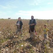 Cotton pickers on the field © UGF 2015