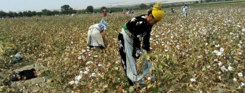 Work on the cotton fields 2015 (Source: UGF monitors)