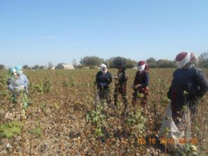Interviews with cotton pickers