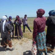 Employers are mobilised to work in the cotton fields for free. Pakhtakor district, Jizzak region, May 22, 2017 © UGF