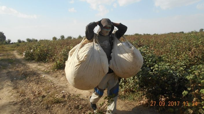 Worker on a cotton field © UGF 2017