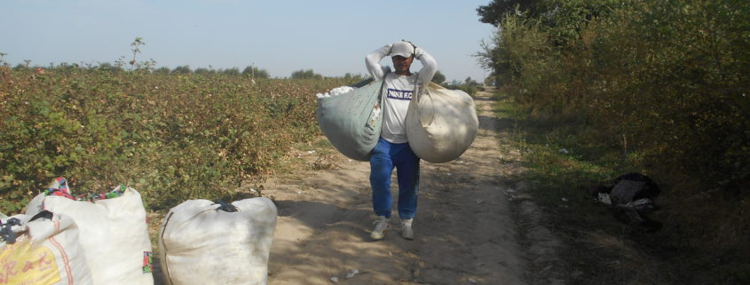 Cotton picker with bags © UGF 2017