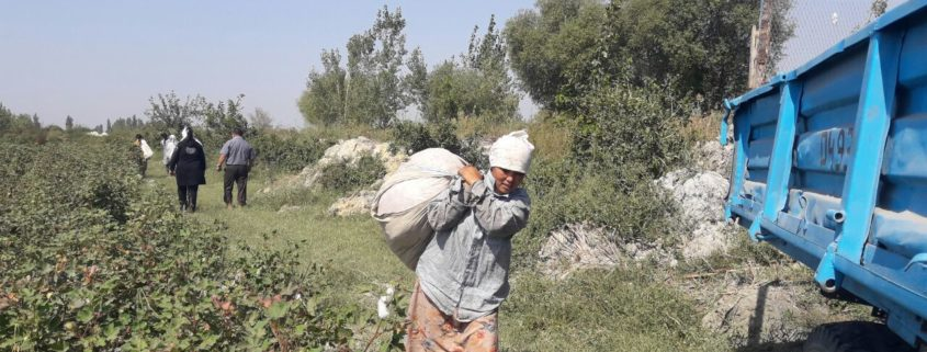 Workers on the cotton fields in the Ferghana region © UGF 2017