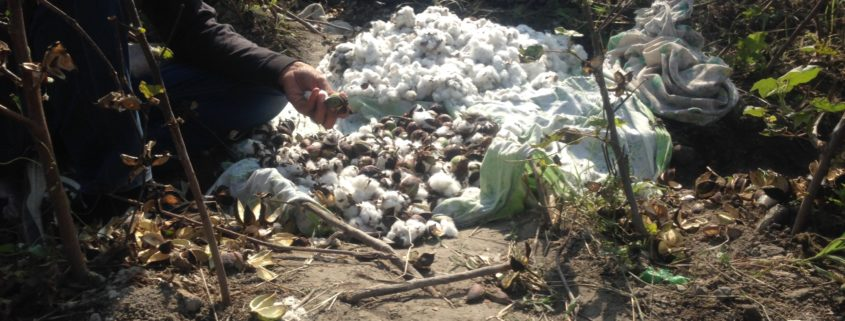 Cotton pickers in Andijan © UGF 2017