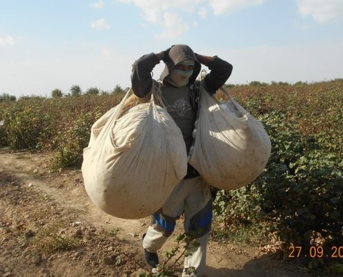 Cotton picker in the Jizzakh Region © UGF 2017